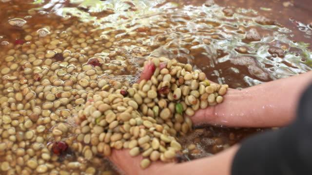 bohnen nach schälmaschine mit wasser, frische kaffeebohnen fräsen in maschine, kaffee-prozess - koffeinmolekül stock-videos und b-roll-filmmaterial