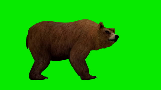 bear attack green screen (loopable) - bear stock videos and b-roll footage