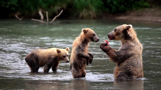 ベア eats サーモン-медвежьясемьяます。Чтоунасназавтракですか? ビデオ