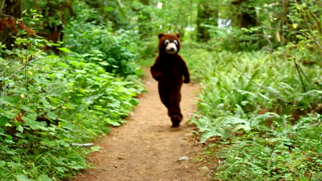 bear gets tackled by skunk in the woods - bear stock videos and b-roll footage