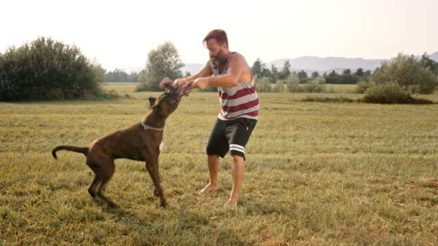 SLO MO Bearded owner pulling rope with his dog in the meadow