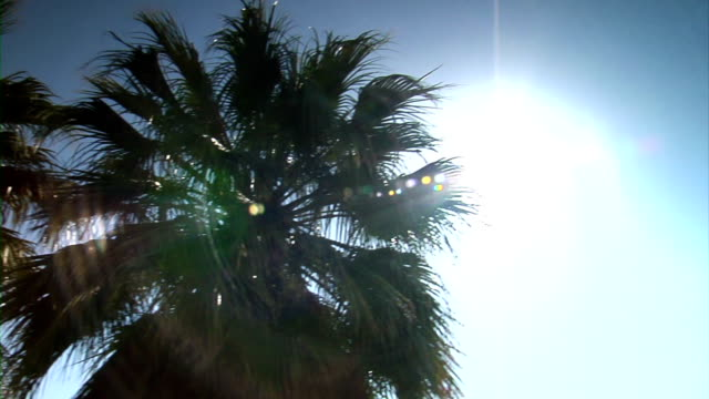 Bearded palm trees with sun flare video