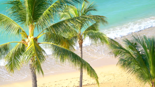 Beatiful view at tropical beach in Hawaii in 4k slow motion 60fps Professional video of beatiful view at tropical beach in Hawaii in 4k slow motion 60fps oahu stock videos & royalty-free footage