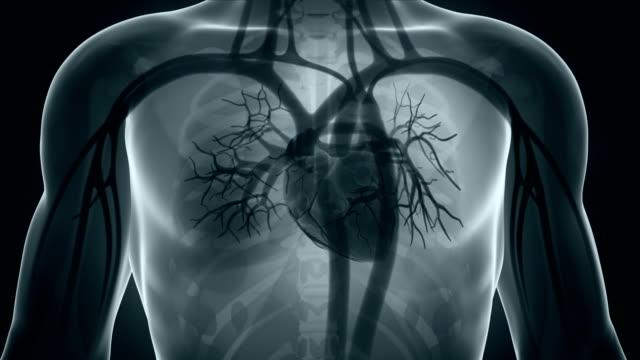 animacja bijące serce - serce człowieka filmów i materiałów b-roll