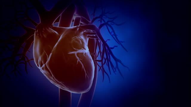 vídeos de stock e filmes b-roll de bater em loop fundo do coração - seio coronário