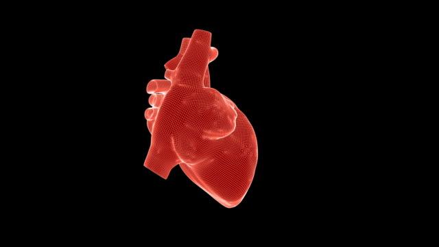 Beating human heart wireframe rotating against black, seamless loop
