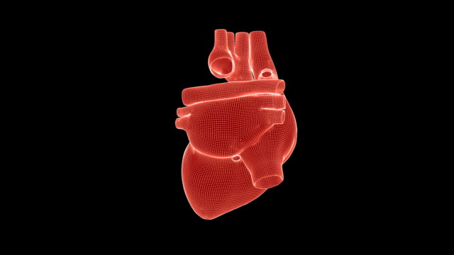 Beating human heart wireframe rotating with Luma Matte, seamless loop Beating human heart wireframe rotating with Luma Matte, seamless loop heart internal organ stock videos & royalty-free footage