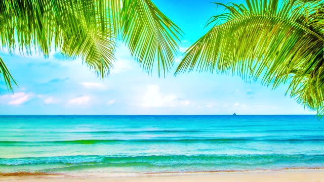 Beaty beach Nature background summer background stock videos & royalty-free footage