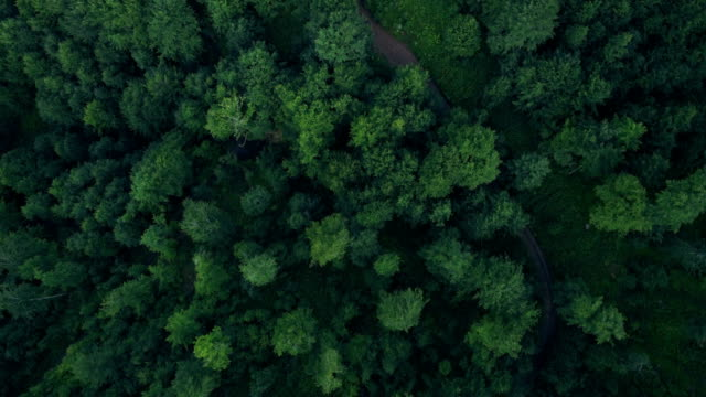 Beautiful Aerial Nature Flyover Beautiful Aerial Nature Flyover pine tree stock videos & royalty-free footage