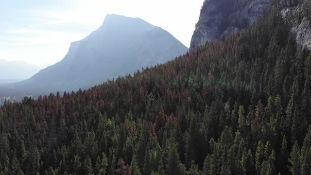 stockvideo's en b-roll-footage met beautiful aerial nature flythroughs voorraad video canada, alaska - amerikaanse staat, banff national park, bos, landschap - landschap - blue sky