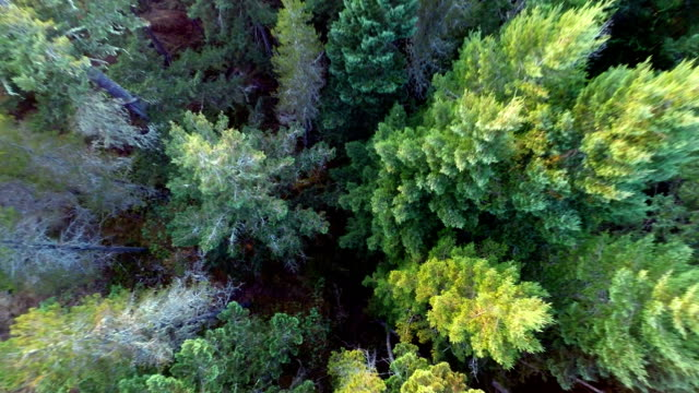 Beautiful Aerial Nature Flythroughs