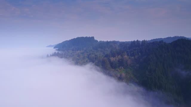 Beautiful Aerial Shot of California Coastal Redwood Forest видео