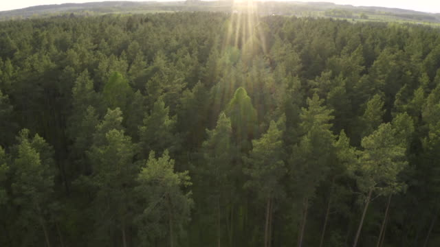 beautiful aerial view of forest - польша стоковые видео и кадры b-roll