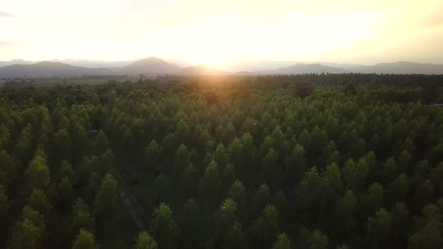 Beautiful aerial view of forest