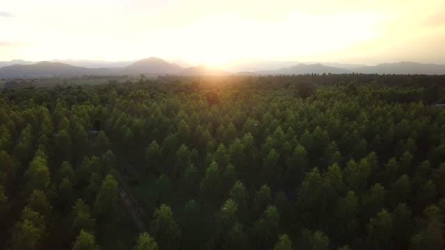 bella vista aerea della foresta - monti appalachi video stock e b–roll