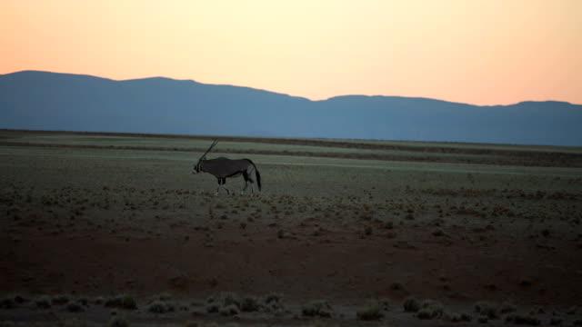 schöne afrikanische savanne. sunrise. - afrikanische steppe dürre stock-videos und b-roll-filmmaterial