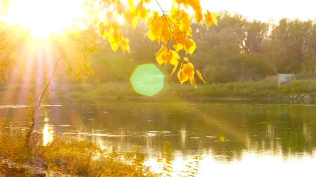 Beautiful and picturesque river. Rapid flow of water. Autumn time. video