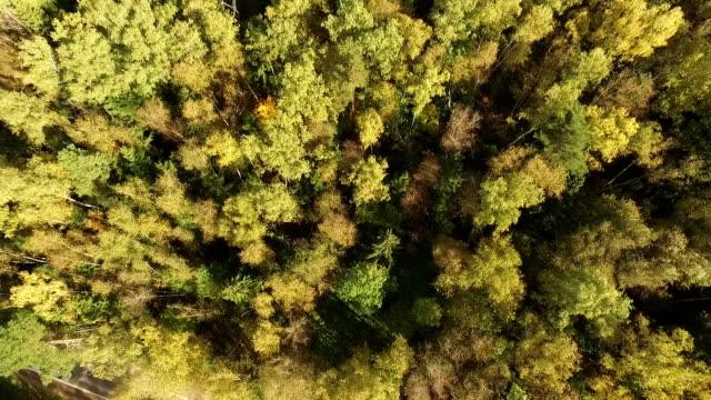 beautiful autumn forest - aerial view - wood texture filmów i materiałów b-roll