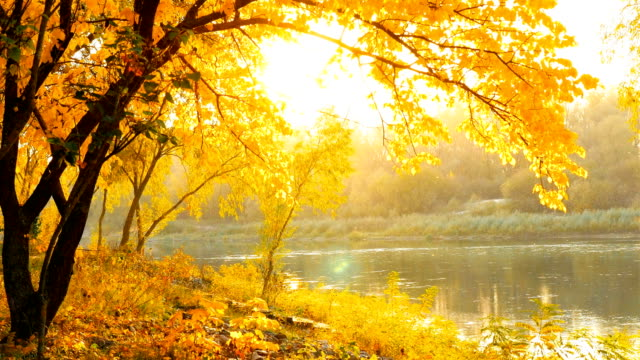 Beautiful autumn landscape. Yellow leaves. River on background video