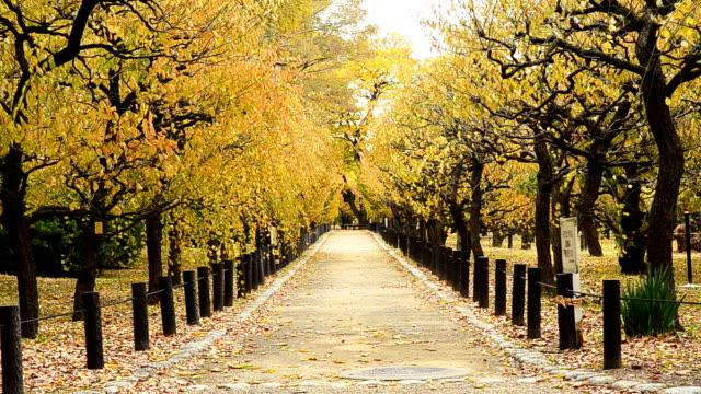 美しい秋の公園 - 秋点の映像素材/bロール