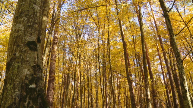 HD DOLLY: Beautiful Autumn Trees In Sunlight video