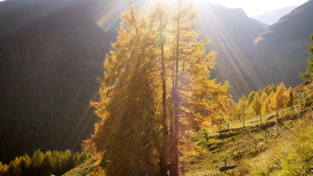 太陽の光に照らされた明るいオレンジ色の木を持つヨーロッパアルプスの美しい秋の谷 - チロル州点の映像素材/bロール