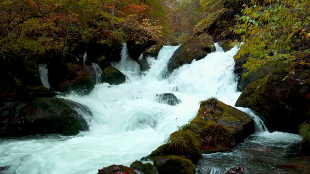 Beautiful autumn view of a waterfalls in the Oirase River Beautiful autumn view of a waterfalls in the Oirase River at Oirase Gorge in Towada Hachimantai National Park at Aomori Prefecture, Japan. rapids river stock videos & royalty-free footage
