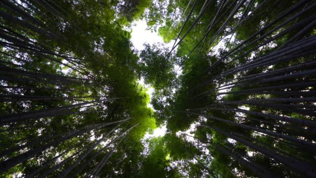 Beautiful bamboo forest in Arashiyama Kyoto city