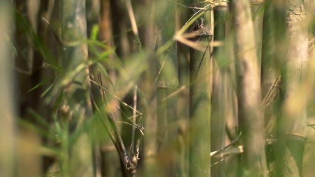 beautiful bamboo jungle cinematic look video