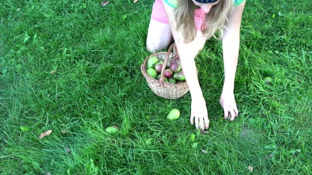 Beautiful blond woman with wicker basket picking pears in garden meadow. FullHD video