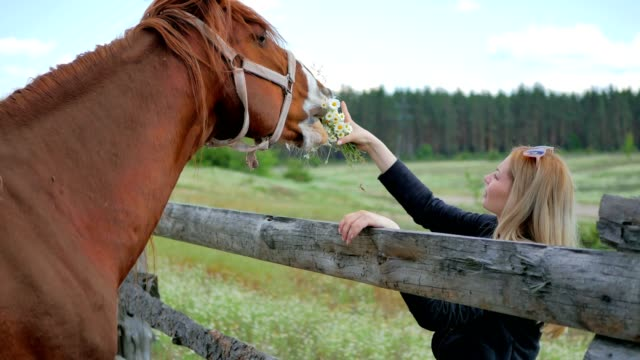 Beautiful blonde feed the horse with flowers through the fence video