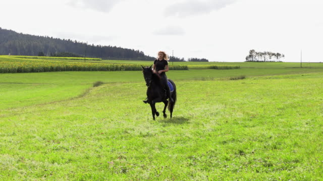 vidéos et rushes de belle blonde monte un champ sur un cheval noir - dressage équestre