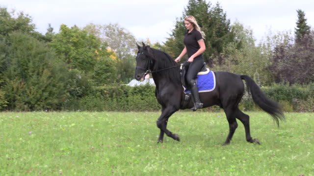 beautiful blonde riding a black horse rides on a flower field beautiful blonde riding a black horse on a flower field cowgirl stock videos & royalty-free footage