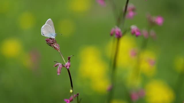 Beautiful blue butterfly on pink flower