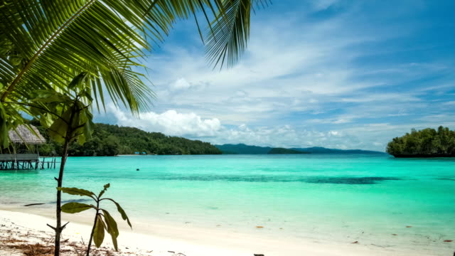 Beautiful Blue Lagoone with a Palmtree in Front, Gam Island, West Papuan, Raja Ampat, Indonesia video