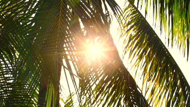 beautiful bokeh sunlight that sits through the coconut trees at the beach in the summer - summer background filmów i materiałów b-roll