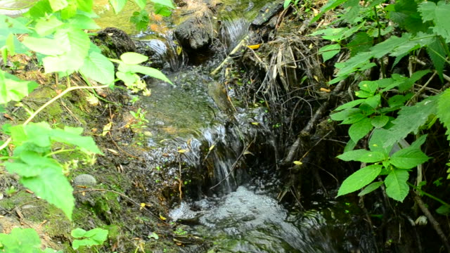 Beautiful brook with small waterfalls flowing in a forest video
