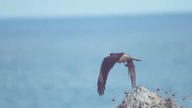 クローズ アップ、被写し界深度: 美しい茶色の猛禽無限の青い空に高騰。 - 鳥点の映像素材/bロール