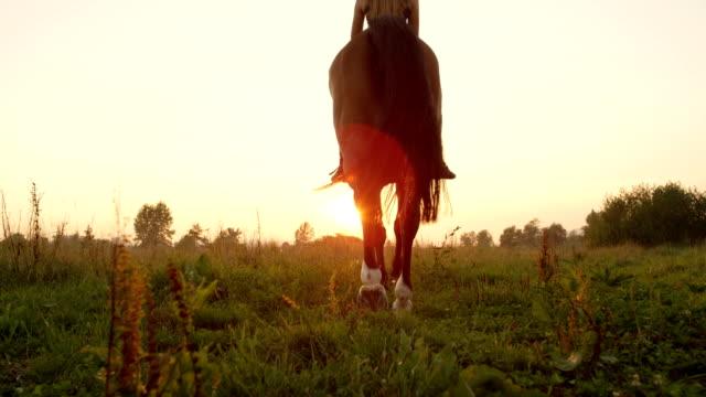 低角度のビュー: ライダー黄金日の出に歩くと美しい茶色の馬 - 動物に乗る点の映像素材/bロール
