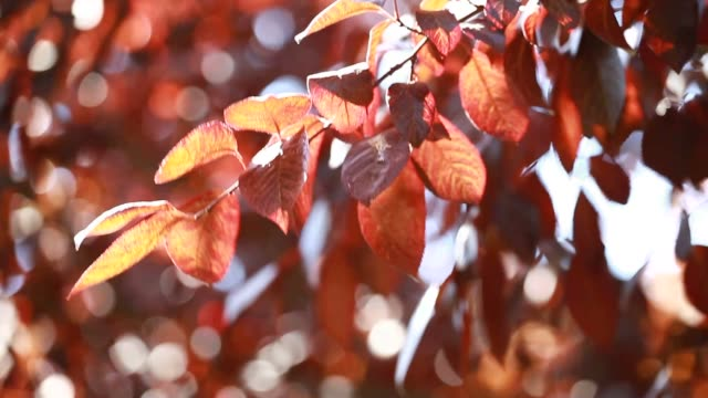 Beautiful brown leaves and bright sun over blurred background video