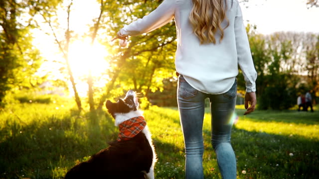 Beautiful brunette playing with dog in nature during sunset