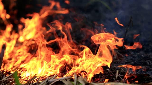 bellissimo bruciare il fuoco di fiamma - incendio video stock e b–roll