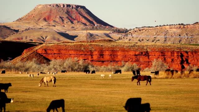 bellissimo butte ranch attivi con bestiame thermopolis wyoming stati uniti occidentali - ovest video stock e b–roll