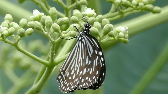 bella farfalla assorbire un po 'dolce dai fiori - farfalla ramo video stock e b–roll