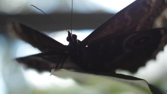 schöner schmetterling mit unscharfen hintergründen. gerüst. makro des insekts - schwache beleuchtung stock-videos und b-roll-filmmaterial