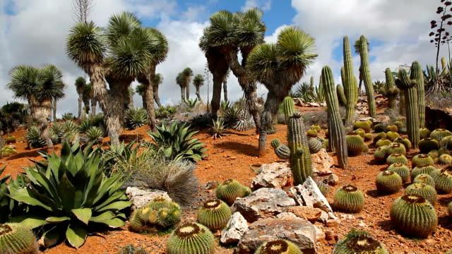 Beautiful Cactus Countryside video