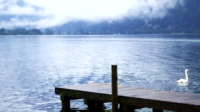 beautiful calm cloudy lake with small port and duck, lake at Hallstatt, Austria video