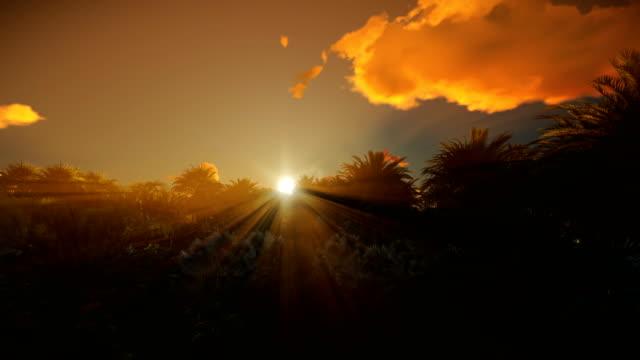 vídeos de stock e filmes b-roll de beautiful clouds and sunrise over palm tree forest, 4k - oleo palma
