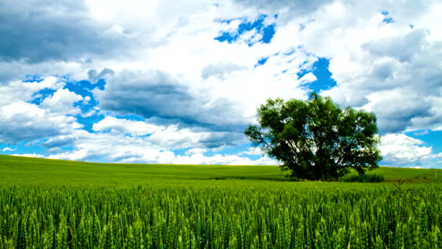 HD TIME LAPSE: Beautiful Cloudscape Over Countryside video