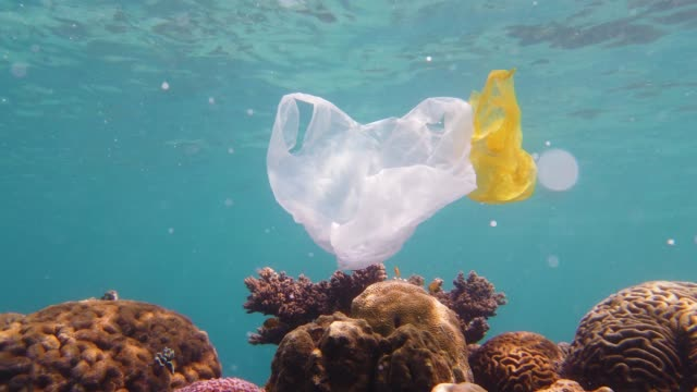 Beautiful coral reef polluted with plastic bag Plastic Bag polluting a coral reef, environmental pollution. Plastic bag polluting coral reef. Ecological problem. floating on water stock videos & royalty-free footage